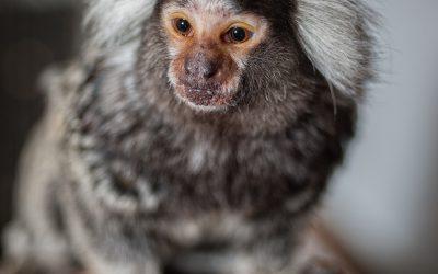 Внутри вольера: ужин для обезьянок