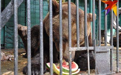 Мишкина зимовка в Кишинёвском зоопарке