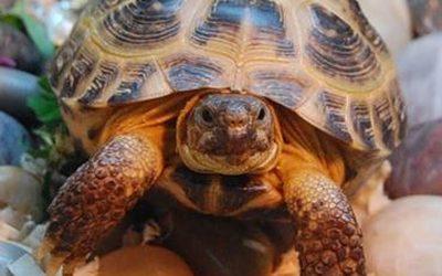Всемирный день черепахи!