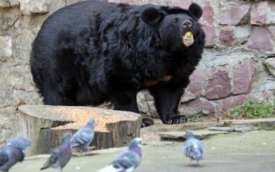 Пожилая медведица умерла во время зимней спячки в Московском зоопарке