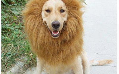 Зоопарк в Китае попытался выдать золотистого ретривера за льва