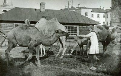 «Этим снимкам почти 100 лет». Пермский зоопарк опубликовал уникальные архивные фото