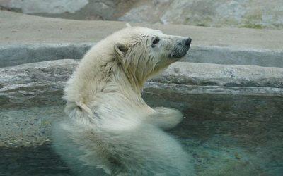 Московский зоопарк приютил осиротевшего медвежонка