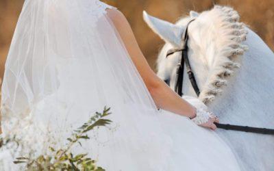 """Свадебные фотосессии в """"Царстве лошадей"""""""
