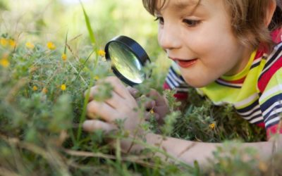Copiilor despre animăluțe: lecții la grădina zoologică