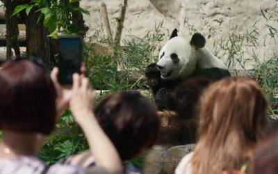 Пандам в Московском зоопарке подарили подарки в День защиты детей