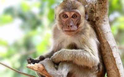 Pentru ce la grădina zoologică din Voronej maimuțele citesc cărți?