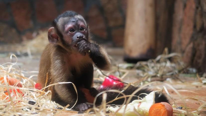 """Grădina Zoologică din Sankt Petersburg a rezumat rezultatele campaniei """"Cadourile toamnei"""""""